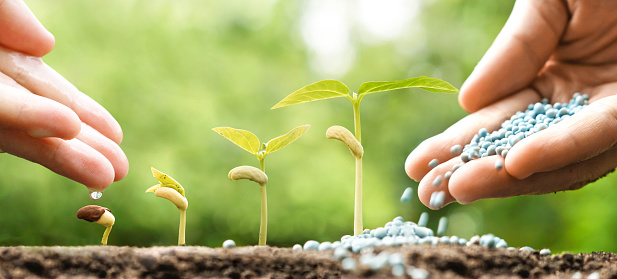 912882270 istock photo agriculture 531606098