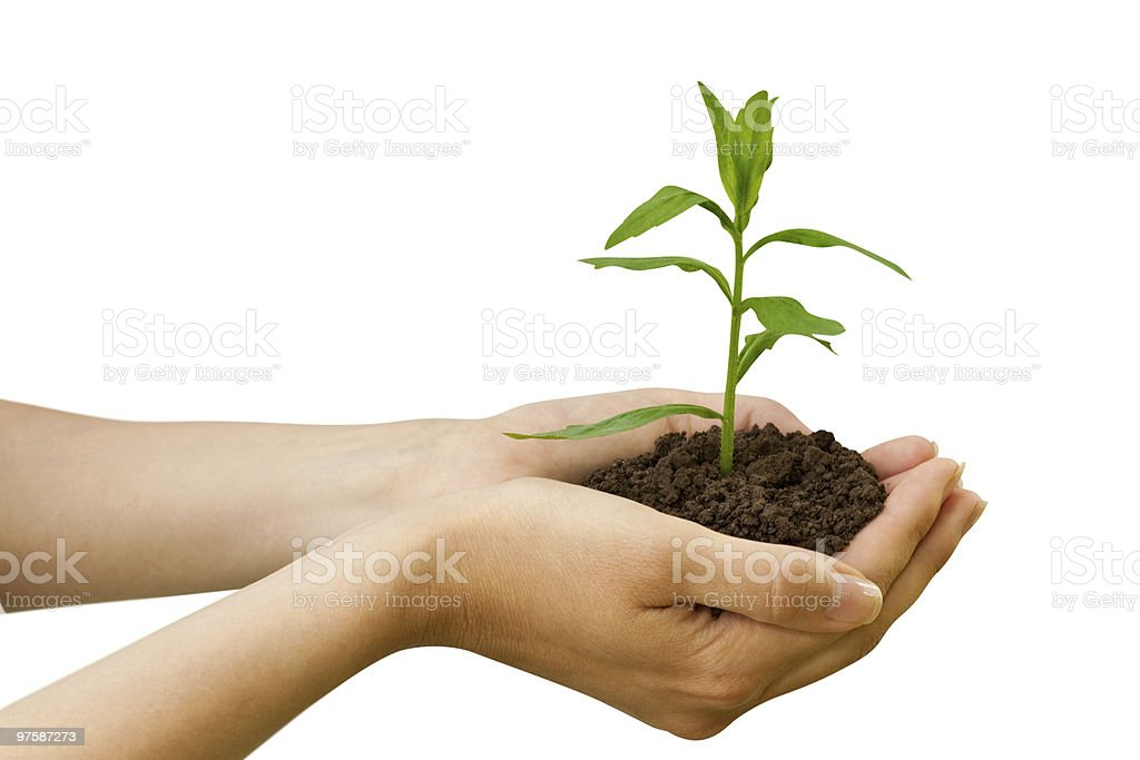 agriculture. plant in a hand royalty-free stock photo