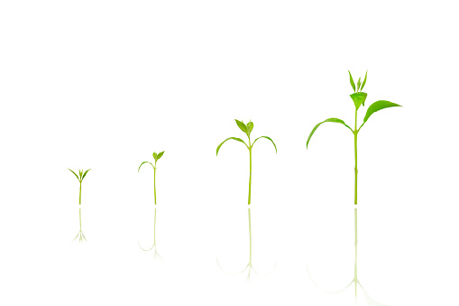 1094263056 istock photo Agriculture plant seeding growing step concept on white isolated background. 1176340980
