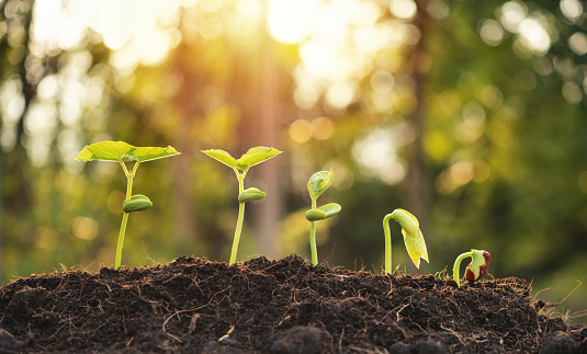 1094263056 istock photo Agriculture plant seeding growing step in garden and sunlight 1205511916