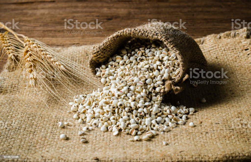 agriculture products,job's tears stock photo