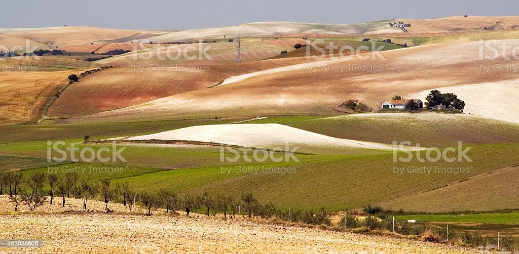 Agriculture, rolling hills, wheatfields, cornfields, Andalusia, Spain stock photo