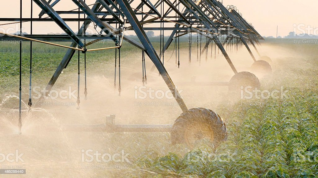 Agriculture, soybean field watering system in sunset stock photo