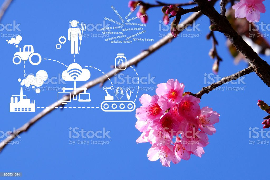 Agriculture Technology    Agritech system icons on Pink cherry blossom blue sky at angkhangstation chiang mai Thailand stock photo