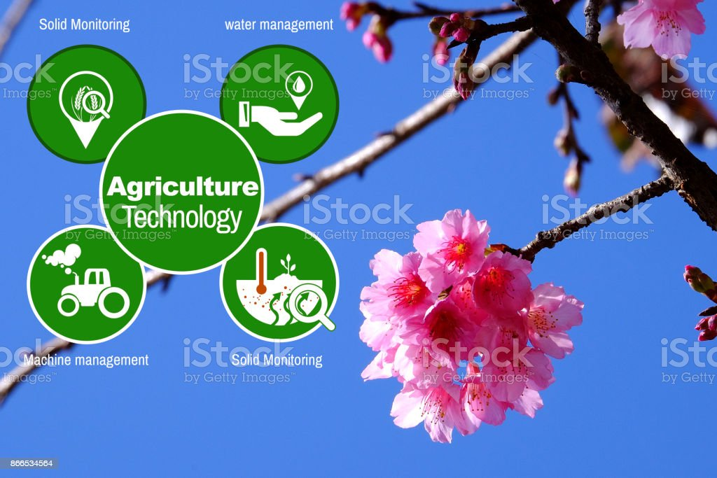 Agriculture Technology    Agritech system icons on Pink cherry blossom at angkhangstation chiang mai stock photo