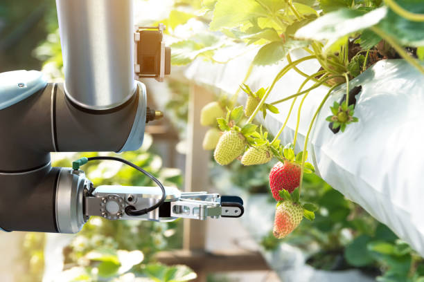 Agriculture technology , artificial intelligence concepts, Farmer use smart farm automation robot assistant image processing for detection weed ,spray chemical , replace worker and increase precision. stock photo