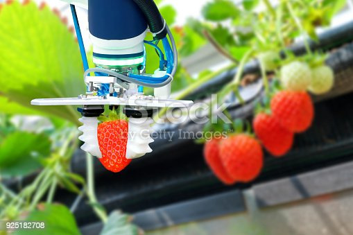 istock Agriculture technology , artificial intelligence concepts, Farmer use smart farm automation robot arm assistant image processing for harvest strawberry , replace worker and increase precision. 925182708