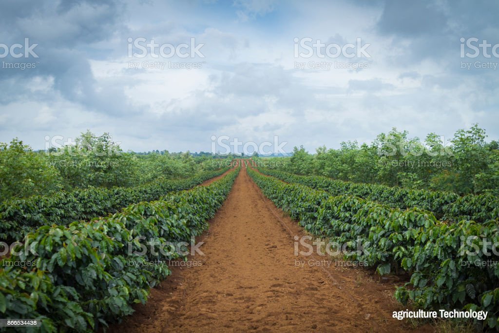 Agriculture Technology coffee plantation landscape stock photo