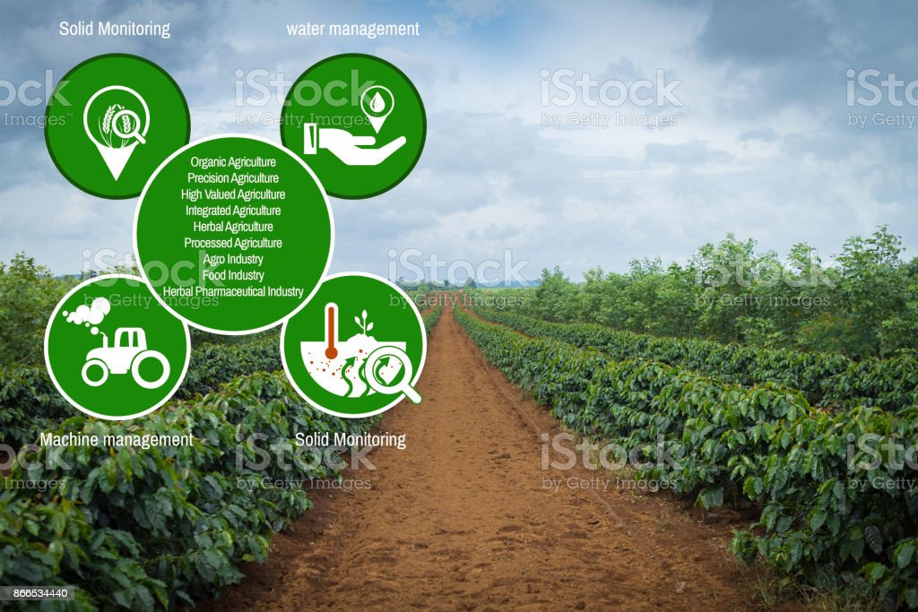 Agriculture Technology concept Agritech system coffee stock photo