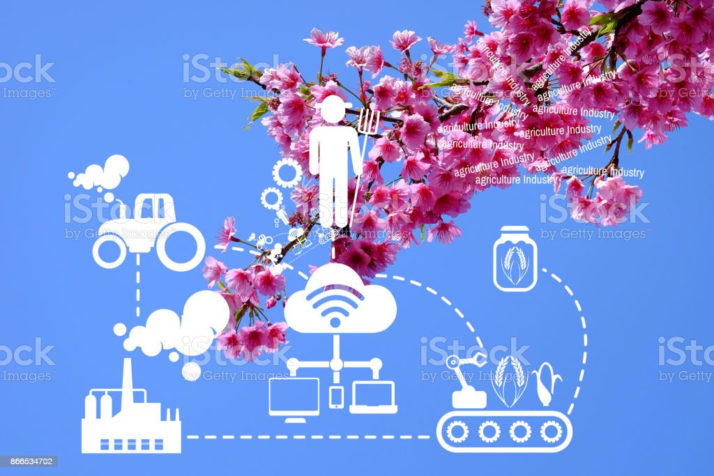 Agriculture Technology   concept Agritech system icons on Pink cherry blossom at angkhangstation chiang mai Thailand stock photo
