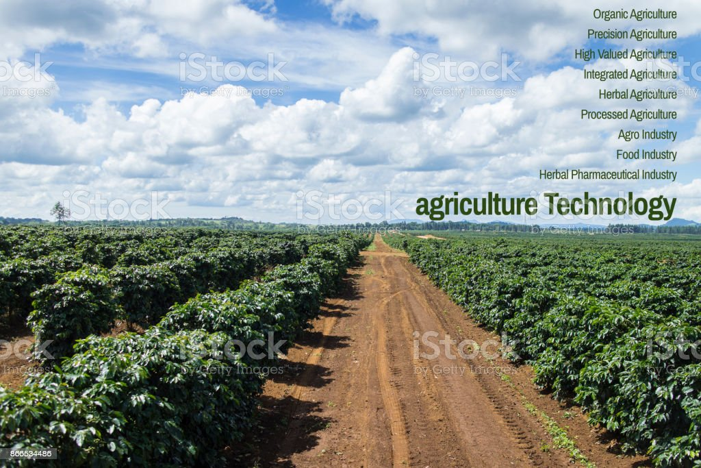 Agriculture Technology concept coffee plantation in Pakse Laos stock photo
