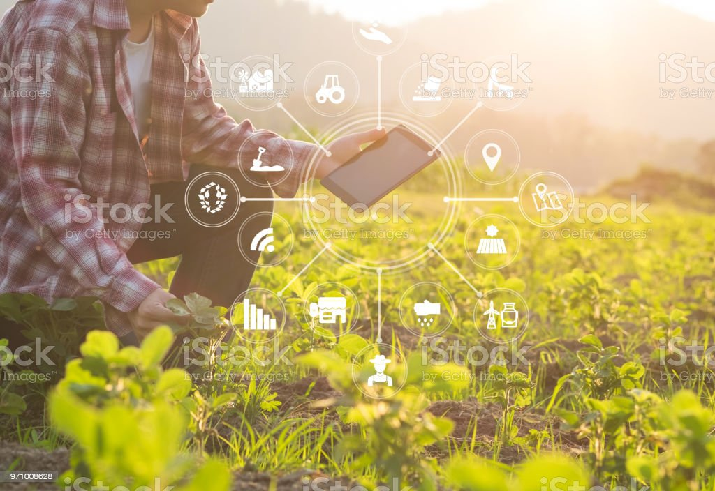 Agriculture technology farmer man using tablet computer analysis data and visual icon. stock photo