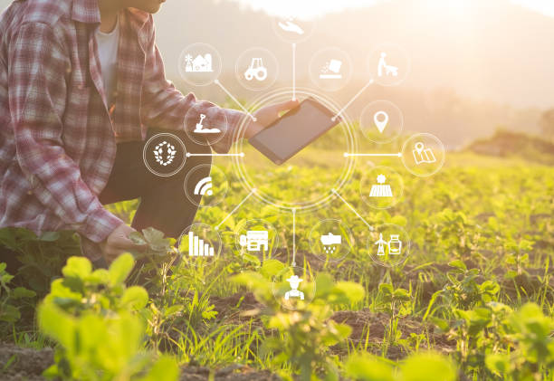 agriculture technology farmer man using tablet computer analysis data and visual icon. - agriculture stock pictures, royalty-free photos & images