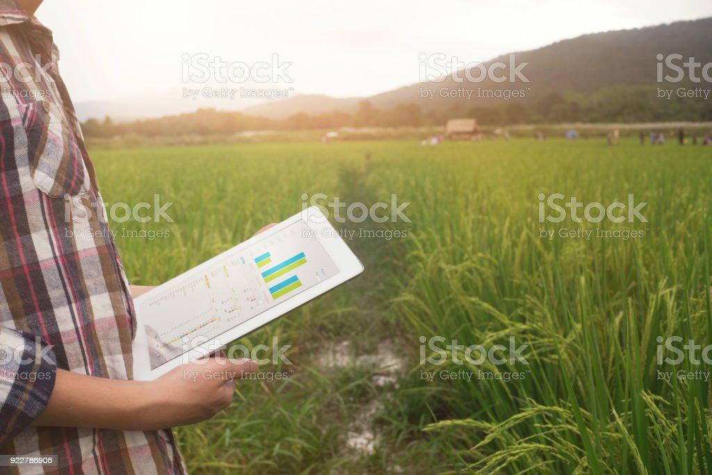 tecnología de agricultura, hombre del granjero de uso de tablet PC en el campo de cosecha. - foto de stock