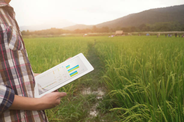 agriculture technology, farmer man using tablet computer on harvest field. stock photo