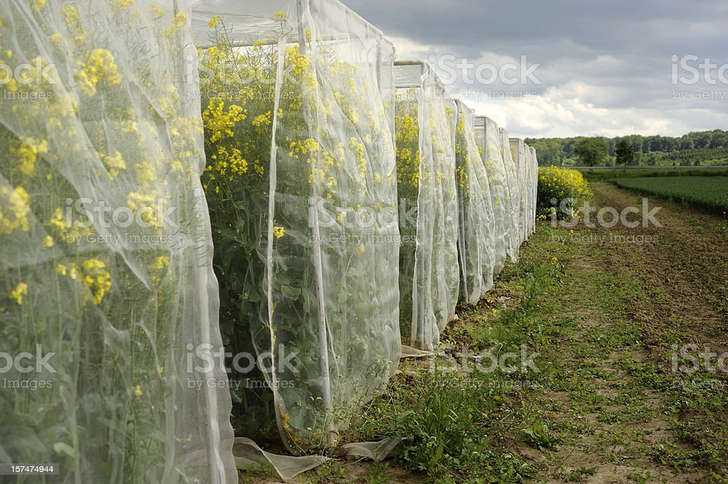 Agriculture test area royalty-free stock photo