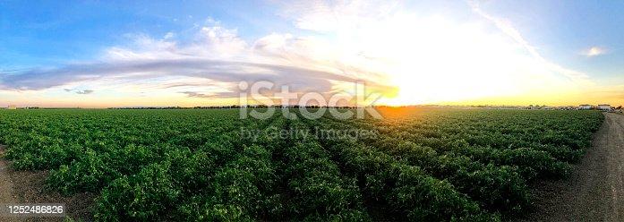 istock Agriculture Tomato Farm in Central California 1252486826