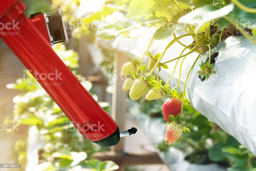 Agriculture vertical farming technology , artificial intelligence precision concepts, Farmer use smart farm automation robot assistant image processing for detection weed ,spray chemical. stock photo