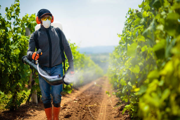 Agriculture worker. Young farmer spraying pesticides. Taking care about vineyard. Agriculture worker. Young farmer spraying pesticides. Taking care about vineyard. crop sprayer stock pictures, royalty-free photos & images