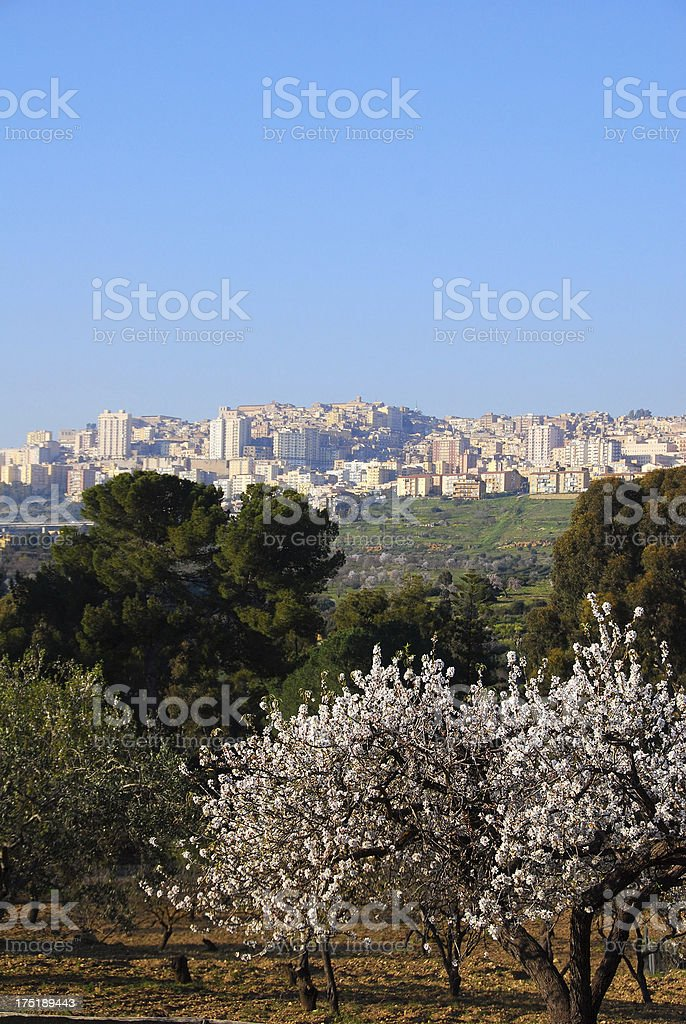 Agrigento, Sicily with Almond Blossoms stock photo