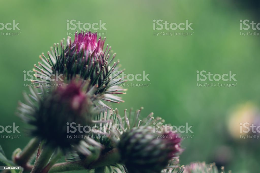 Agrimony flower macro stock photo