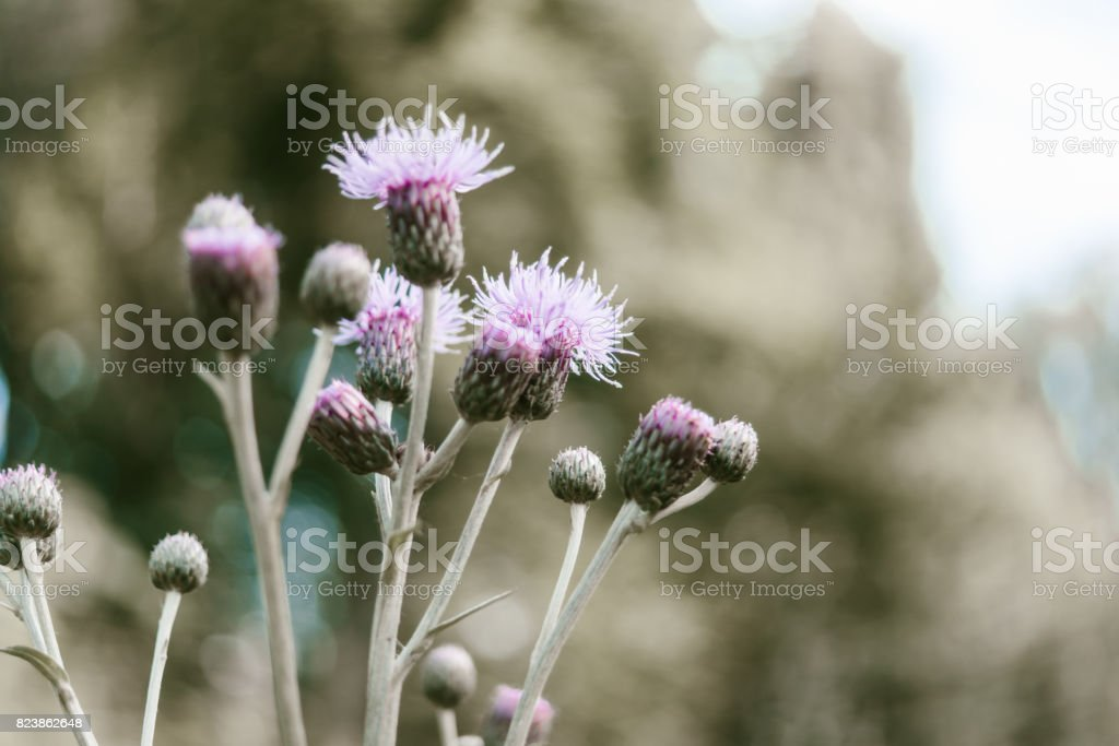 Agrimony flower macro. Toned photo stock photo