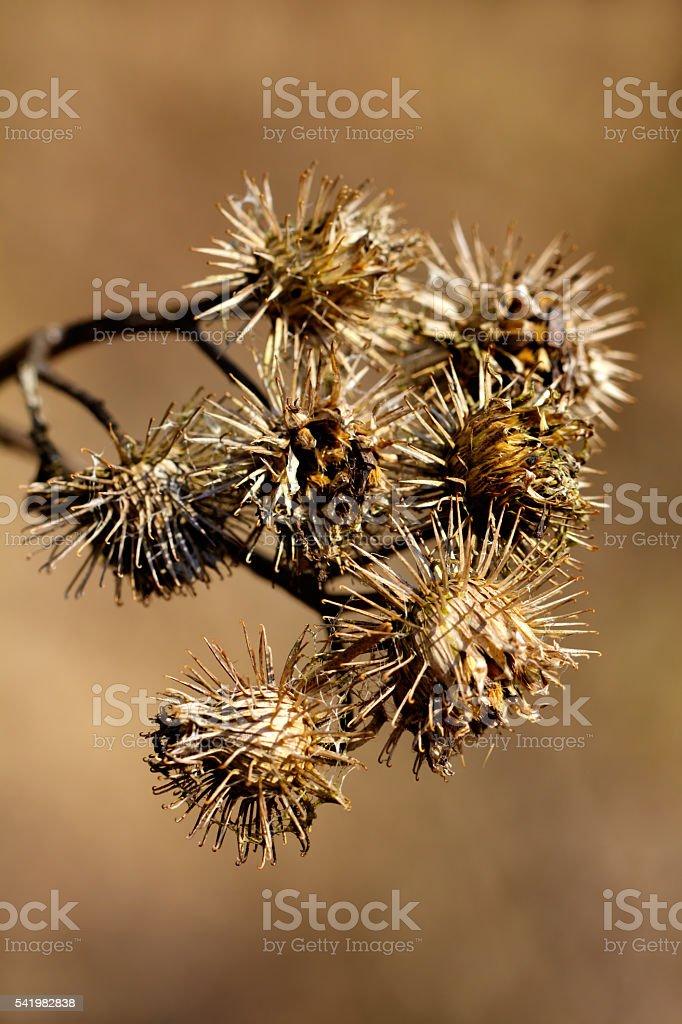 Agrimony. Flower. Rural. stock photo