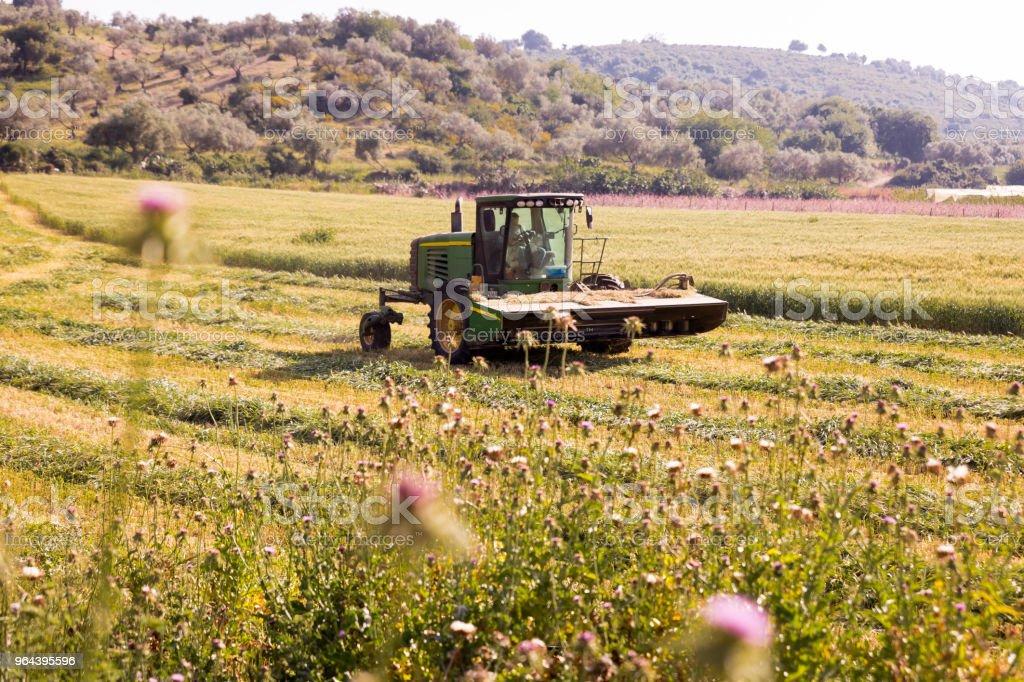 Agrimotor voertuig trekker werken veld oogsten. - Royalty-free Avontuur Stockfoto