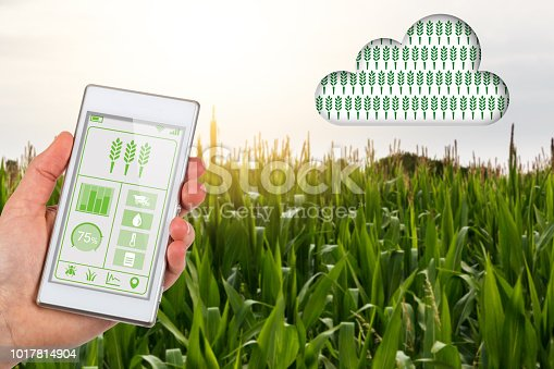 istock Agritech concept smartphone app linking to cloud in corn field 1017814904