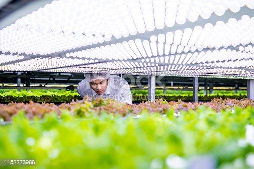 istock Agri-tech Specialist Examining LED Lit Living Lettuce 1152223966