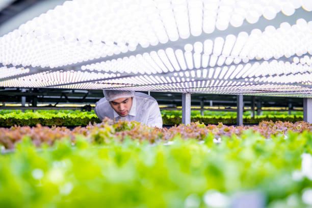 Agritech-Spezialist untersucht LED-Leberlebette – Foto