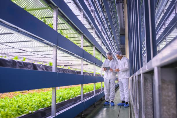 agri-tech specialists examining stacks of indoor crops - comida sustentavel imagens e fotografias de stock