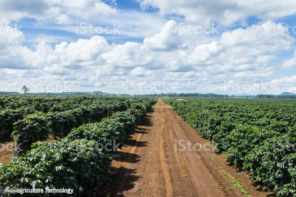 Agritech system coffee plantation in Pakse Laos stock photo