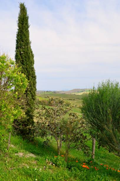 Agritourism in Tuscany stock photo