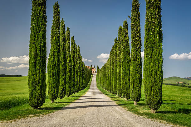 Agritourism in Tuscany with cypresses path stock photo
