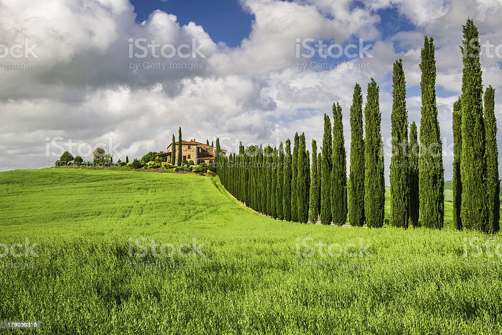 Agritourism in Tuscany with cypresses royalty-free stock photo