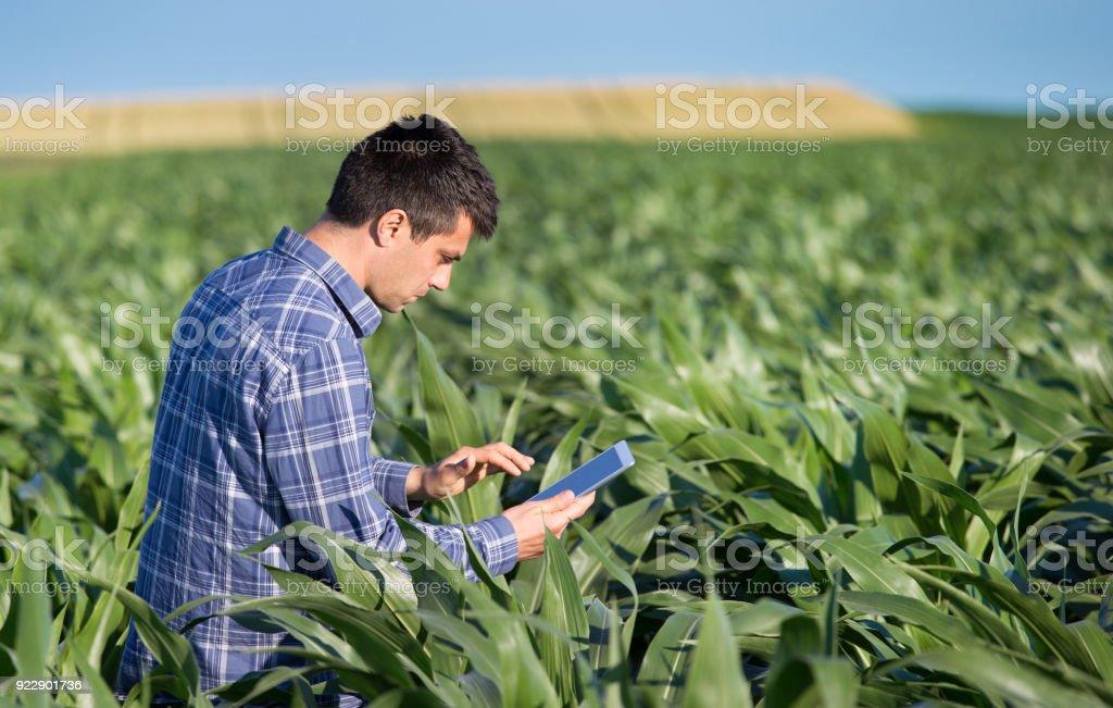 Agronom hocken im Maisfeld mit tablet – Foto