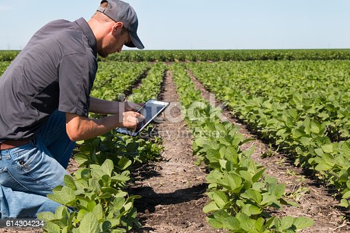 istock Agronomist Using a Tablet in an Agricultural Field 614304234