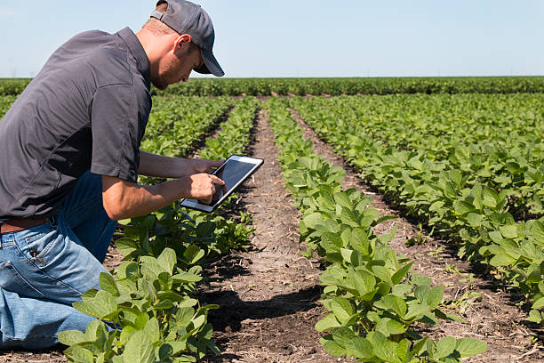 agronomist using a tablet in an agricultural field - agriculture stock pictures, royalty-free photos & images