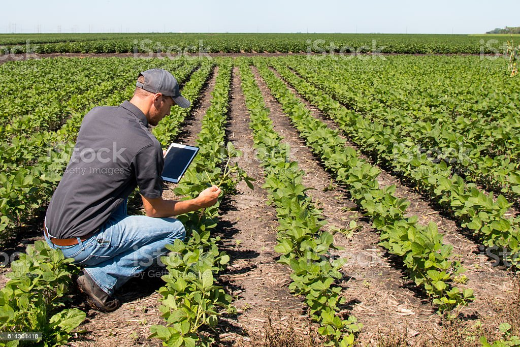 Agronomist Using a Tablet in an Agricultural Field - foto de stock