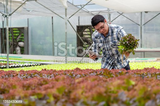 1047941544 istock photo agronomist using digital mobile tablet checking fresh red oak lettuce salad organic hydroponic vegetable in hydroponic greenhouse garden nursery farm, smart farming and agricultural innovation concept 1253430689