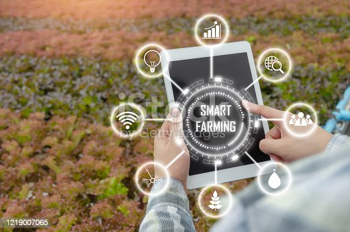 1047941544 istock photo agronomist using mobile tablet computer analysis data development with visual icon in hydroponic greenhouse garden nursery farm, smart farming, digital technology and agricultural innovation concept 1219007065