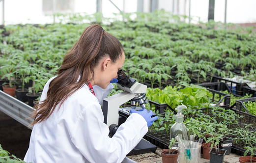 istock Agronomist with seedlings nad microscope in greenhouse 962243332