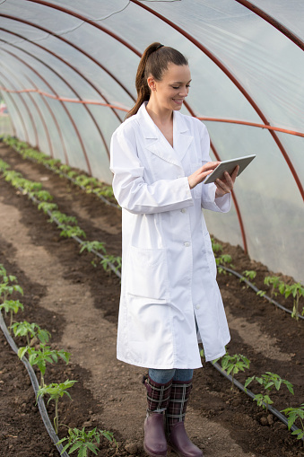 istock Agronomist with tablet in greenhouse 949376626
