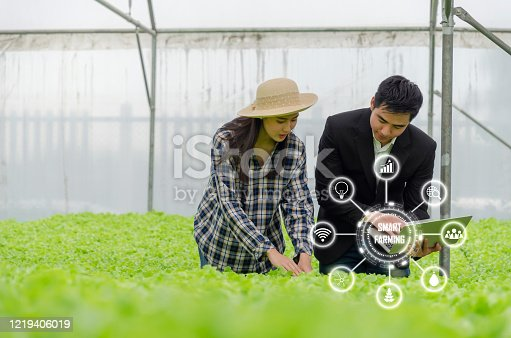 1047941544 istock photo agronomist woman asian farmer checking fresh green oak lettuce salad, organic hydroponic vegetable with laptop in greenhouse garden nursery farm with visual icon, smart farming, agriculture concept 1219406019