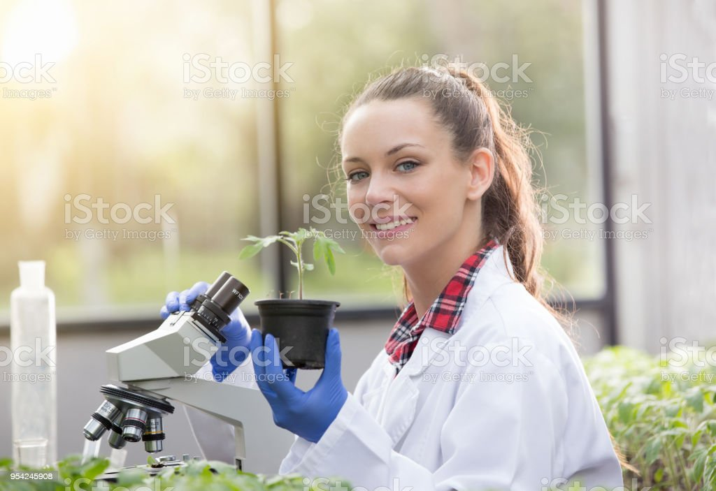 Agronomist woman with seedling in greenhouse stock photo