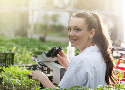 istock Agronomist woman with seedlings and microscope in greenhouse 949375978