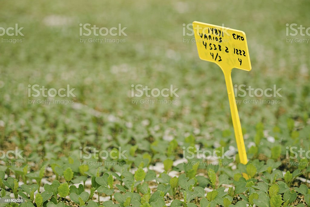Agronomy royalty-free stock photo