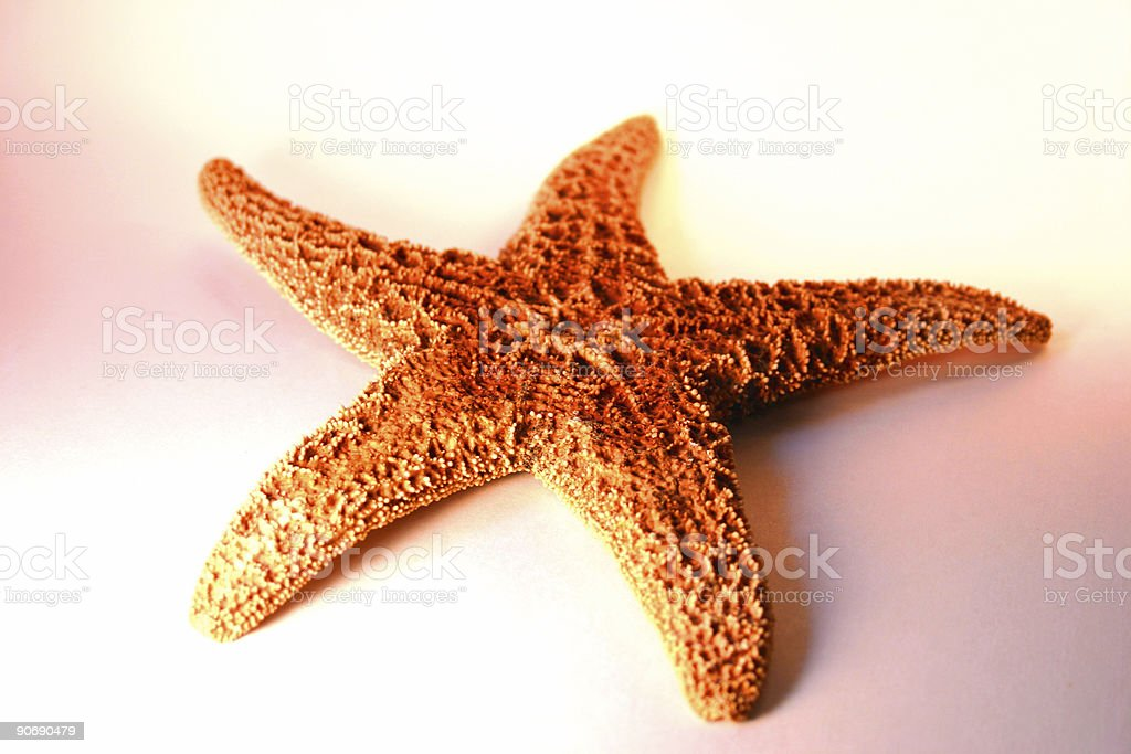 Aguada Starfish royalty-free stock photo