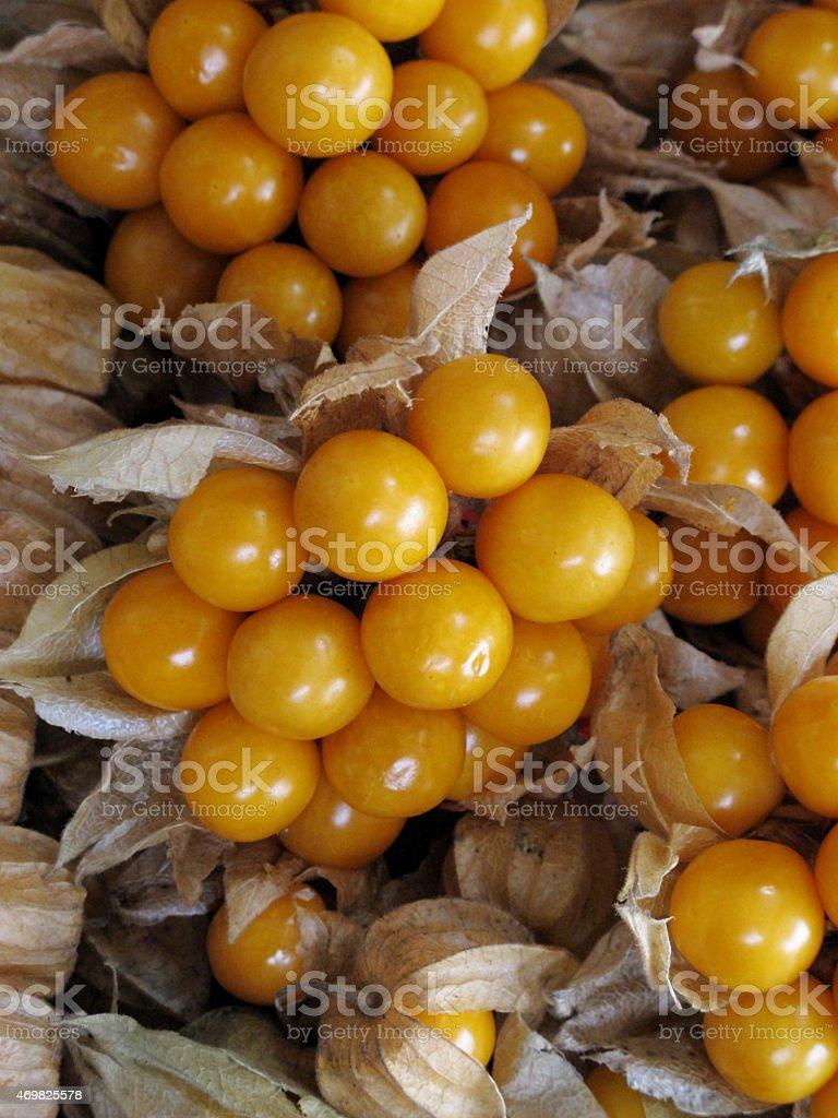 Aguaymanto, Peruvian fruit stock photo